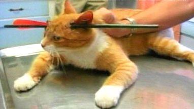 Animal foi tratado pelos médicos e passa bem; associação ofereceu recompensa para quem tiver informações do agressor