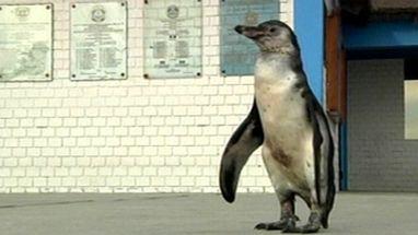 Animal se perdeu do grupo e foi parar na capital Lima; ele foi levado para delegacia após ser achado por policiais